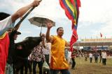 Vòng loại chọi trâu truyền thống Đồ Sơn 2009